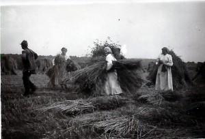 Ernte_August_1943